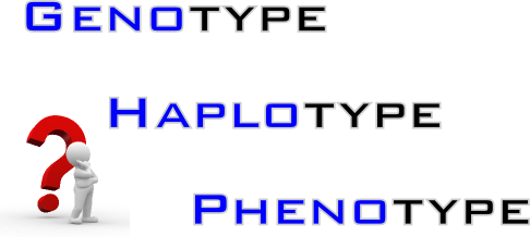 genotype-haplotype-phenotype
