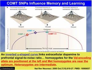 V158M COMT Dopamine U Curve